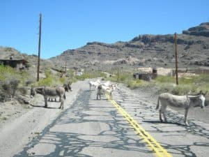 oatman rt 66 motorcycle tour